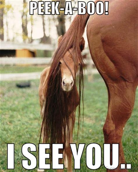 super funny horse memes