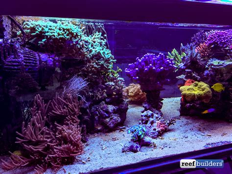 sea reef aquarium the supernatural reef tank of seabox aquarium coral featured reefs marquee reef tanks