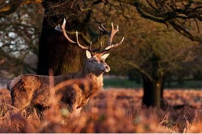 Deer Horns Autumn Wallpapers Desktop Backgrounds Mobile