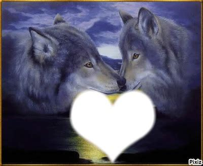 fondos  fotos de lobos fondos de pantalla