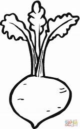 Beetroot Coloring Pages Printable Beets Plant Supercoloring Drawing Preschool Labels Vegetable Vegetables Paper Popular Categories Coloringpages101 sketch template