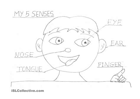 12 Best Images Of My Five Senses Worksheets For Preschoolers  My Five Senses Worksheet, My 5