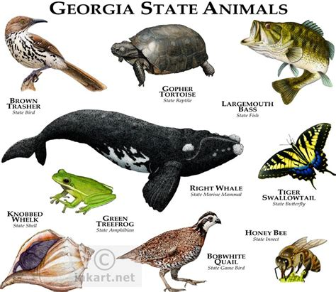 state animals  georgia  art  full color illustrations