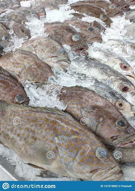 grouper fish market fresh