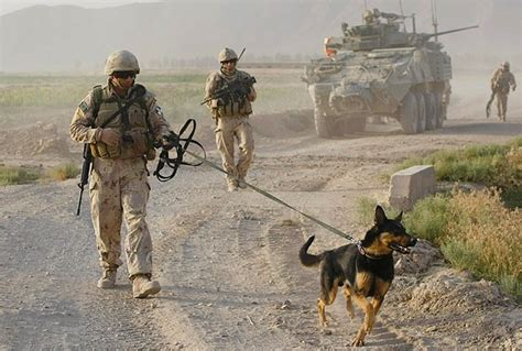 images  military police service therapy