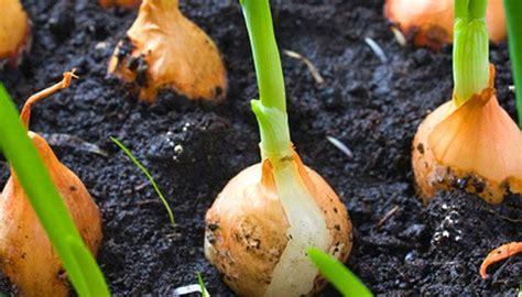 Ab März Im Garten Statt Samen Pflanzen