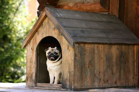 Pets House : The 50 Best Outdoor Dog Houses Of 2019