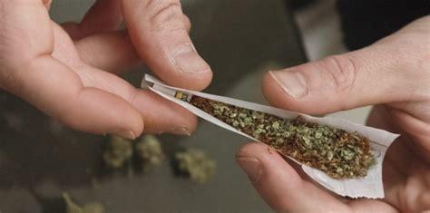 le pour cannabis prix une mol 233 cule pour contrer les effets du cannabis 7 janvier 2014 sciencesetavenir fr