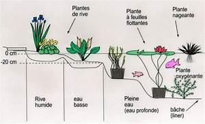 Plante Pour Bassin Extérieur : les plantes et leurs milieux aquatique de la moine ~ Premium-room.com Idées de Décoration