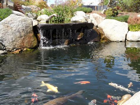 pond waterfalls pictures koi pond waterfalls outdoortheme com