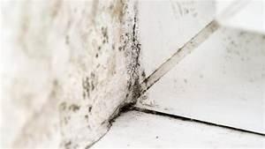 Wie Entfernt Man Schimmel In Der Dusche : wie entfernt man schimmel in der dusche sch nheits design und dekore schwarzer schimmel in der ~ Frokenaadalensverden.com Haus und Dekorationen