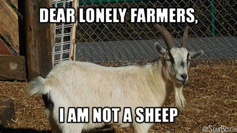 Sheep Memes - 23 funny sheep memes botch