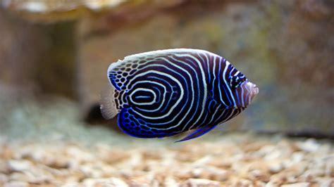 beautiful sea fish hd wallpapers high definition