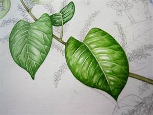 Lizzie Harper watercolour step 5 in painting a leaf ...