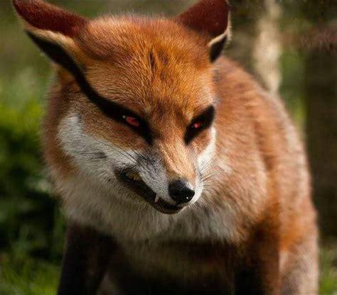 kitsune creatures of folklore 1 mythology