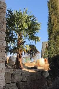 Durchschnittstemperatur Berechnen : palmen ~ Themetempest.com Abrechnung