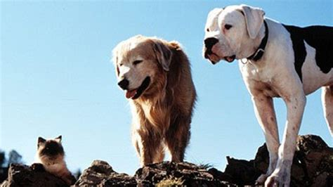 greatest  dogs   history   world