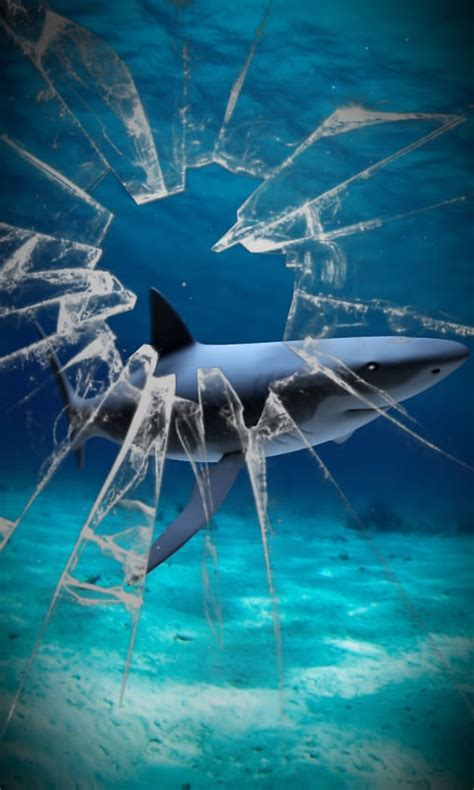 shark wallpaper  pc wallpapersafari