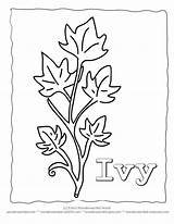 Template Ivy Leaf Coloring Leaves Pages Drawing Printable Templates Drawings Plant Sheets Crafts Outlines Plants Bank Result Popular Sketch Coloringhome sketch template