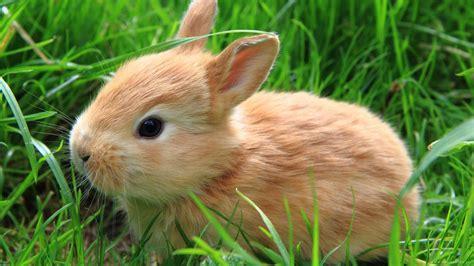 可爱大眼萌小兔子超清电脑桌面壁纸图片大全(3)_可爱图片