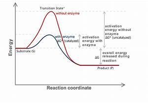 How Do Enzymes Affect Gibbs Free Energy