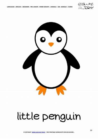 Penguin Flashcard Card Printable Sea Animal Cards