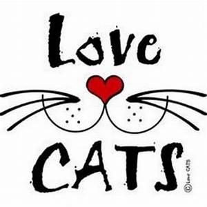 LoveCATS World (@lovecatsworld) Twitter