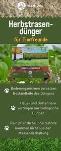 Rasen Düngen Herbst : rasen im herbst d ngen wann wie womit tierfreund ~ Watch28wear.com Haus und Dekorationen