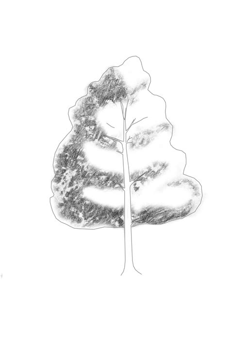 branching  learn   draw  realistic tree