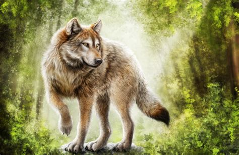 Angry Wolf Wallpaper 4k by Timber Wolf Wallpaper 66 Images
