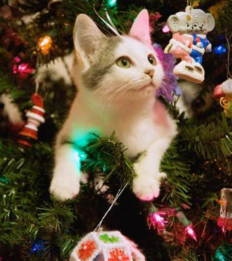 cats     christmas trees mnn mother