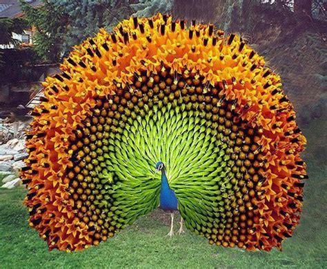 beautiful gallery of unique usa tus palabras con sabidur 237 a asociaci 243 n de reiki 23