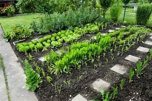 Gemusebeet planen tipps fur praktisch orientierte gartner for Garten planen mit sichtschutzrollo für balkon