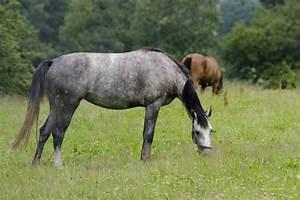 Bilder Von Pferden : zahnstein beim pferd definition ursachen symptome tiermedizinportal ~ Frokenaadalensverden.com Haus und Dekorationen