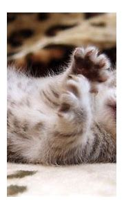 Cat Wallpaper Iphone HD Free #10563 Wallpaper | WallDiskPaper