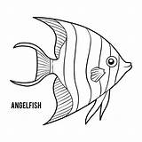 Angelfish Coloring Emperor Illustrations Vector Clip Fish Angel Children Vectors Dreamstime sketch template