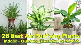 28 best air purifying plants for indoor outdoor