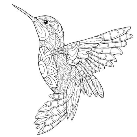 adult coloring page an humming bird bird coloring pages