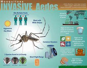 New Invasive Mosquito Species Found In Pasadena Office