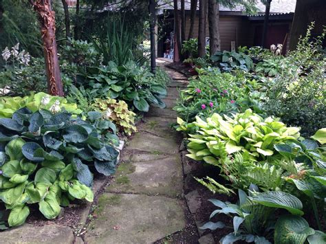 hosta shade garden shade garden hostas for the garden pinterest