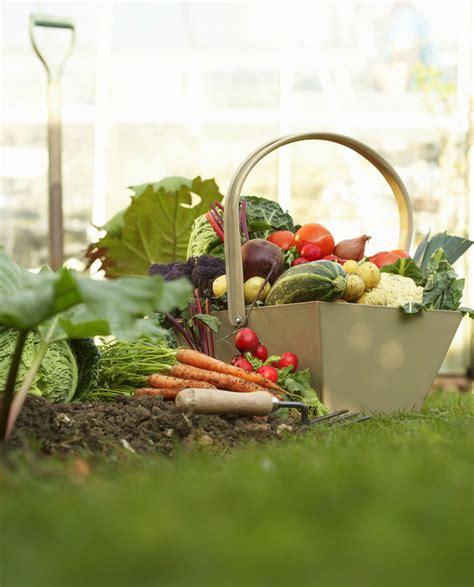 Gardening For Beginners by Garden Planning For Beginners Farmer S Almanac