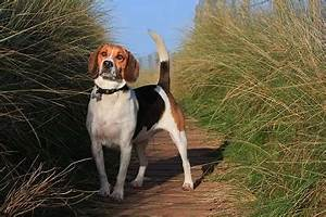 5 Duck Hunting Dog Breeds You Need To Know - Daily ...