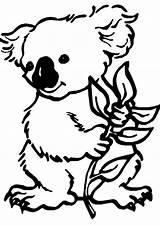 Koala Coloring Bear sketch template