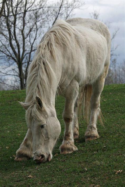 endangered horses