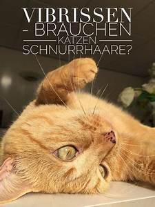 Was Brauchen Katzen : nacktkatzen katzengenetik vererbung der fellfarben und ~ Lizthompson.info Haus und Dekorationen