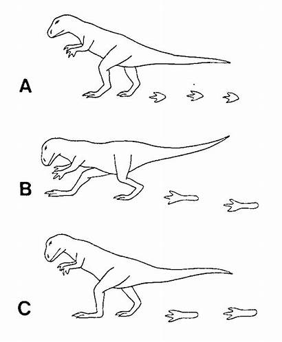 Dinosaur Coloring Footprints Dinosaurs Tracks Plantigrade Locomotion