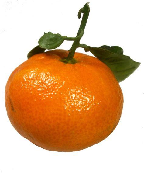 mandarine images mandarine wallpaper  background