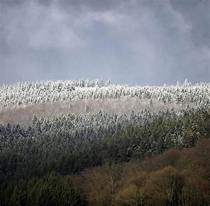 Wann Stellt Man Weihnachtsbaum Auf : best 28 seit wann gibt es den weihnachtsbaum seit wann gibt es den weihnachtsbaum my blog ~ Buech-reservation.com Haus und Dekorationen