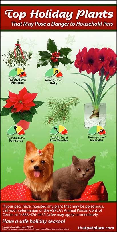 Plants Toxic Holiday Pets Pet Poisonous Animals