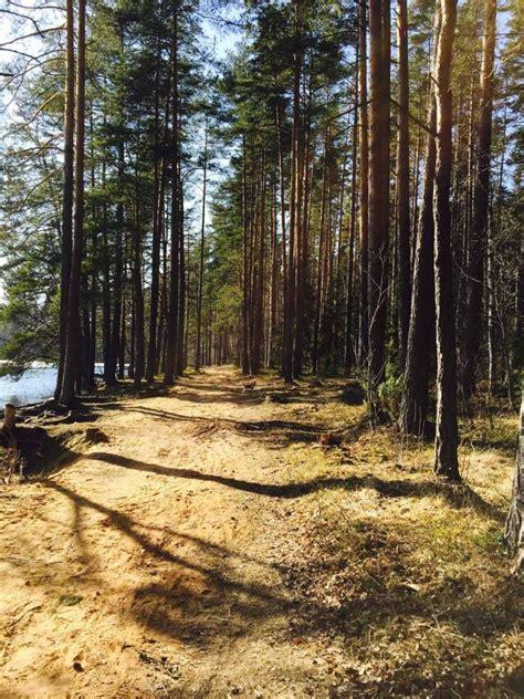 Niniera ezers - Visit Priekuļi